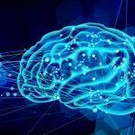 「脳の成長は大人になると止まる」はホント!?